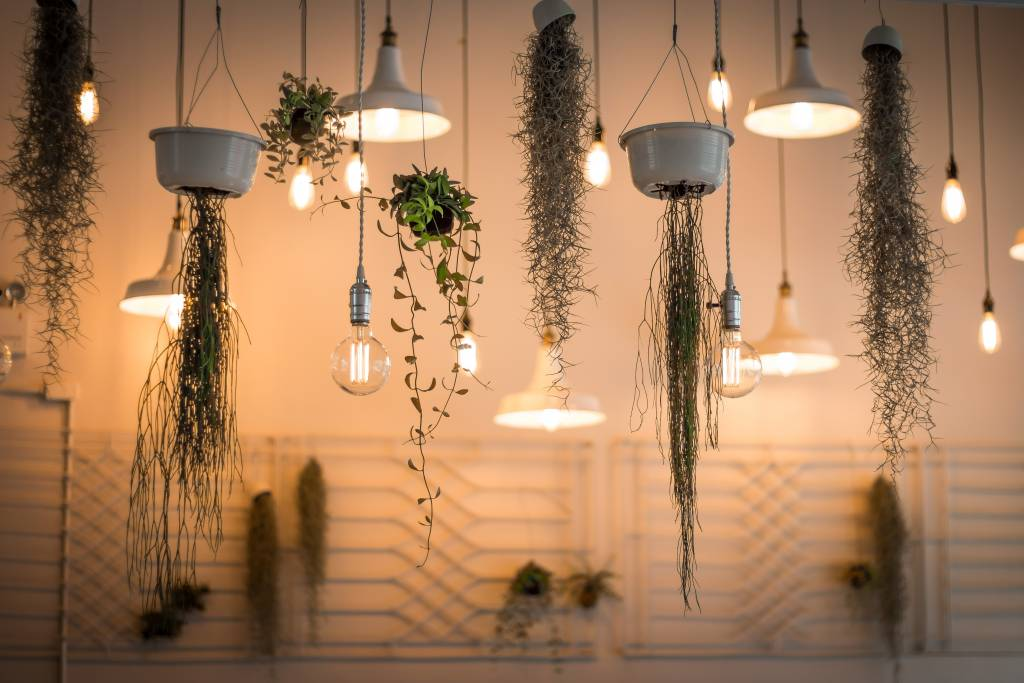Lights and plants hanging from the ceiling